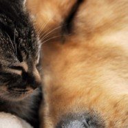 Coming Soon… An Improved Westoak Animal Hospital Website